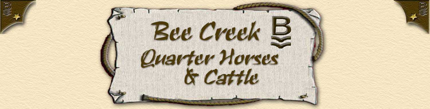 Bee Creek Quarter Horses